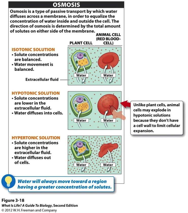 movement inside cells